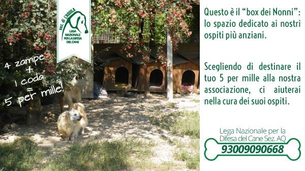I cani anziani: è a loro che vogliamo dedicare i fondi raccolti con il 5 per mille.
