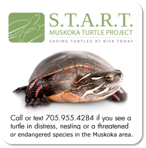 START Muskoka Turtle Project