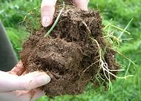 Soil Carbon event
