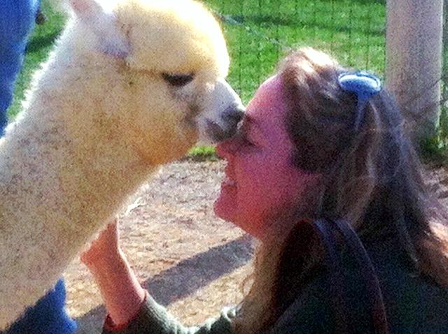 Vashti gets kisses from Young alpaca Emmy.