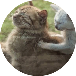 Cats massaging each other