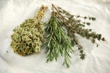 Herbs to help animals during winter colds