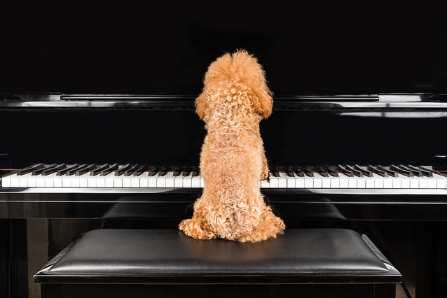 Care and Feeding of Your Piano