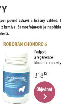 ROBORAN CHONDRO 6