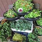 UMBS Garden Produce