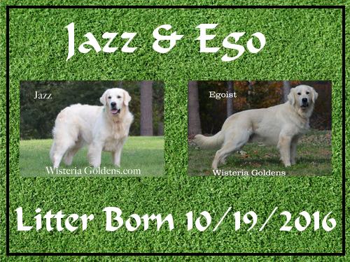 Jazz Litter Born 10-19-2016