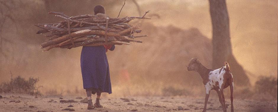 A Tanzanian woman carrying firewood, accompanied by a goat