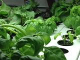 Veg-E Systems hydroponic vertical farm