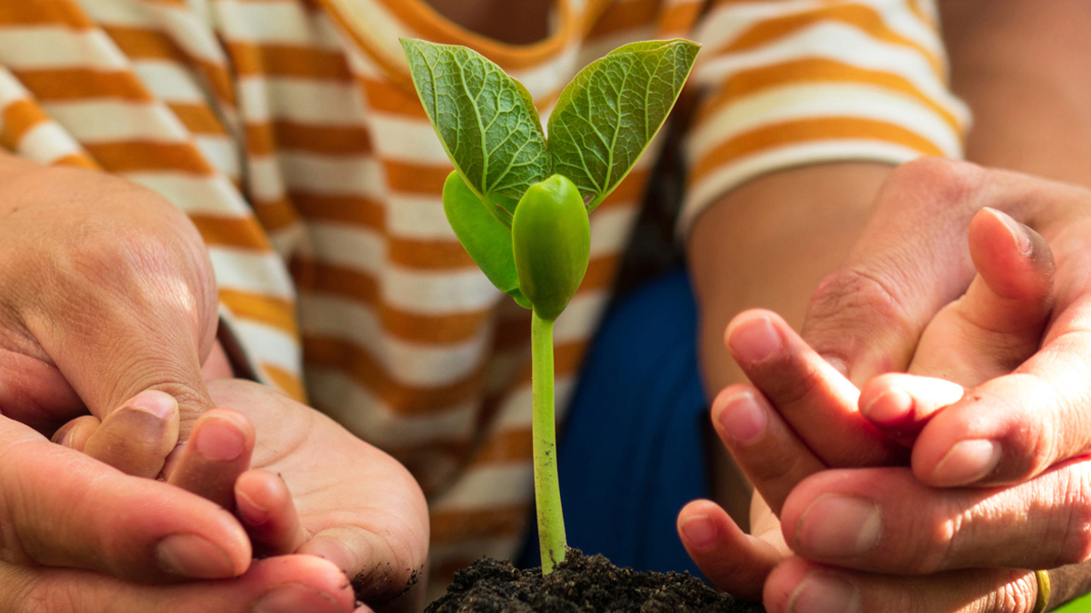 A parent and child's hands around a plant seedling that has sprouted from a mound of soil