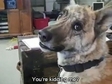 A dog is sad because he doesn't get meat - and let's you know - without mincing his words!!