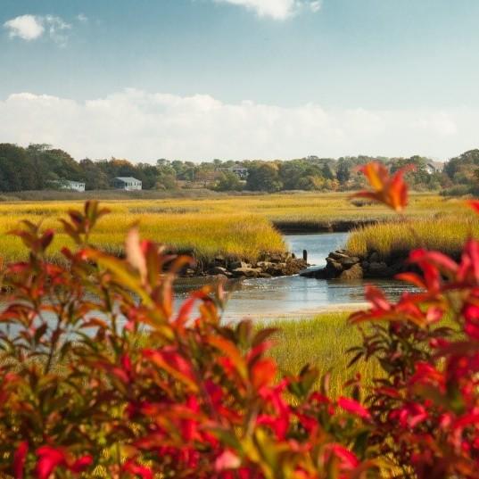 Marshland on the Cape