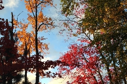 Autumn 2014, Photo by Edie Farwell