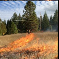Bay Area Prescribed Fire Council- 2020 Spring Meeting and Field Tour