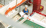 The Evolving Definition of Food Safety