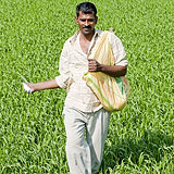 Photo of man sowing rice in India