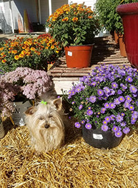 We love plants at Romence Gardens, serving Kalamazoo area