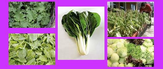 Delivered 5-1-2015 from Tuscarora Organic Coop.
