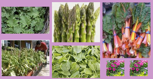 Delivered 5-8-2015 from Tuscarora Organic Coop and Garden Plants!