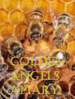Golden Angels Apiary Honey JUST DELIVERED