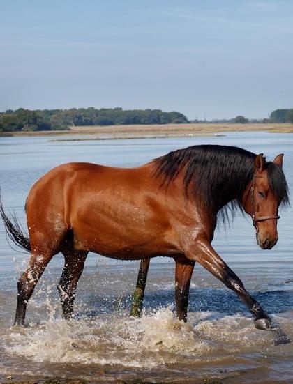 Horse riding holidays at Iken Barns, Suffolk