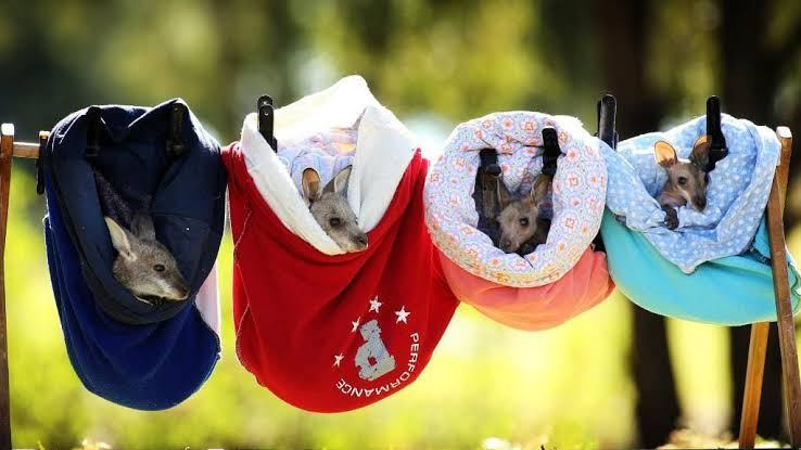 Pouches for marsupials.