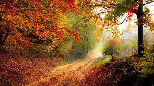 Bospad door een bos in herfstkleuren