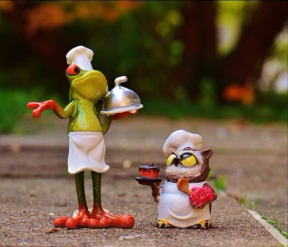 frog and owl cook off