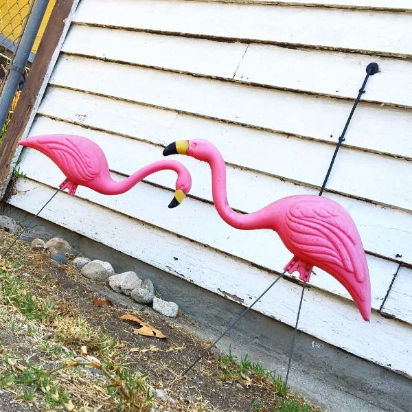 National Pink Flaming Day, Fake Flamingos, Maura MB, Ms. Maura, Maura Murphy-Barrosse