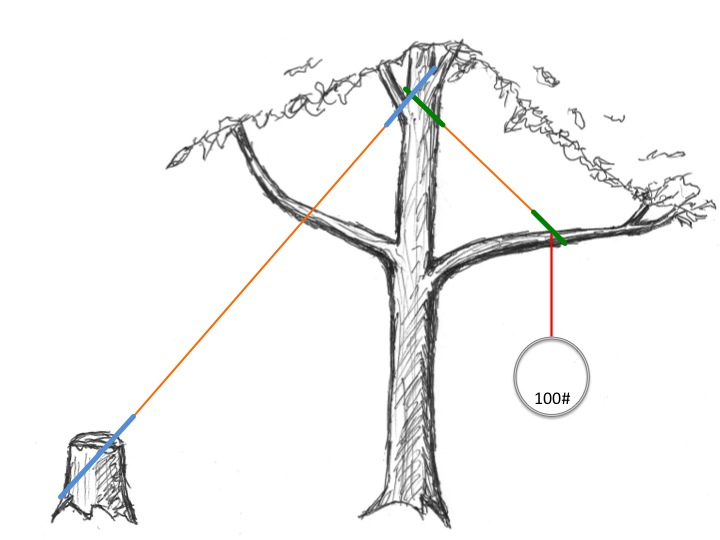 Rigging from Trees