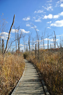 Boardwalk through a wetland at Haven Hill.