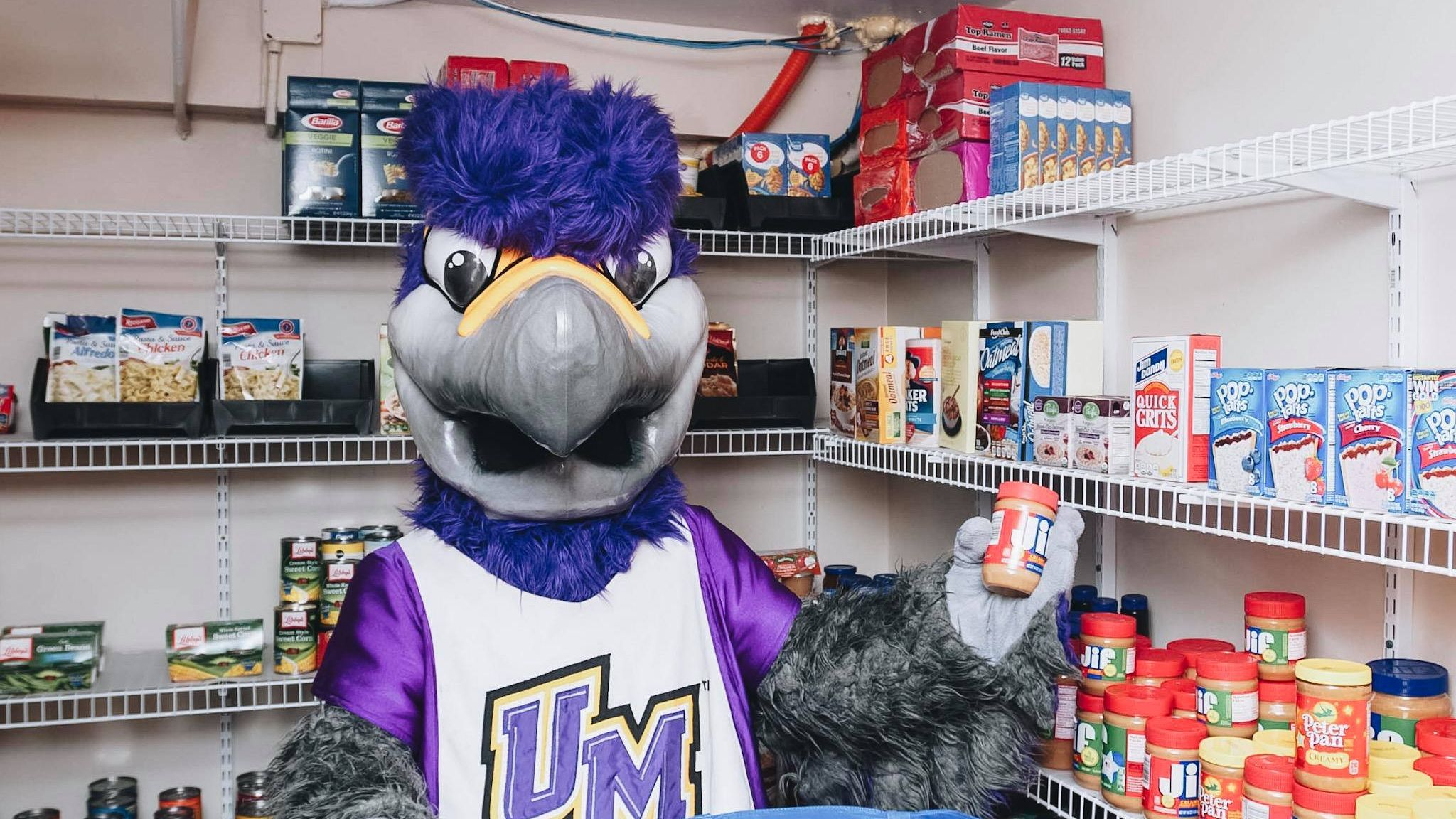 Freddie the falcon in pantry