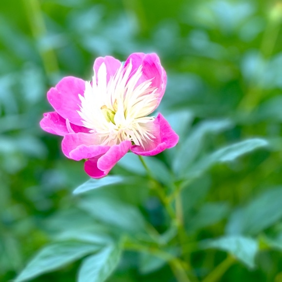 Flower fighting some sudden heat.