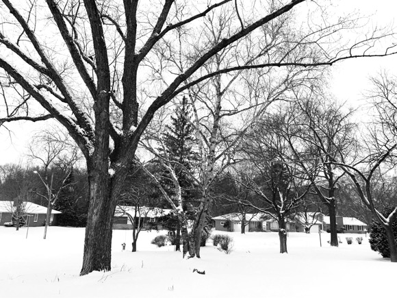 A clean, white blanket of fresh snow on Monday made it look like winter was really here.