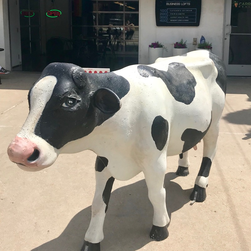 Cow in front of Fletcher's Ice Cream shop.
