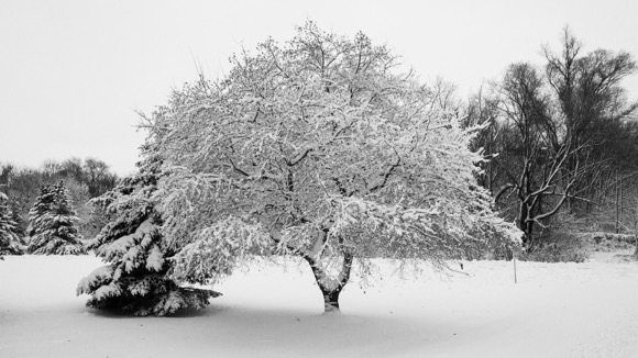 Beautiful scene with snow covered tree.