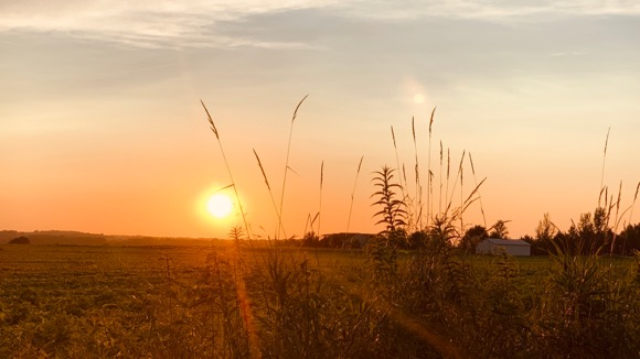 July sun setting over rural Minnesota field.