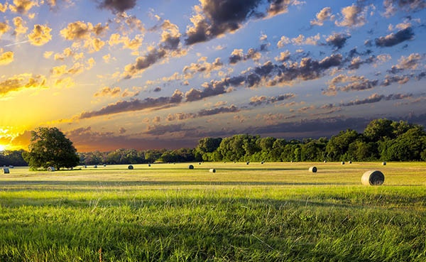 Pasture in Texas at sunset