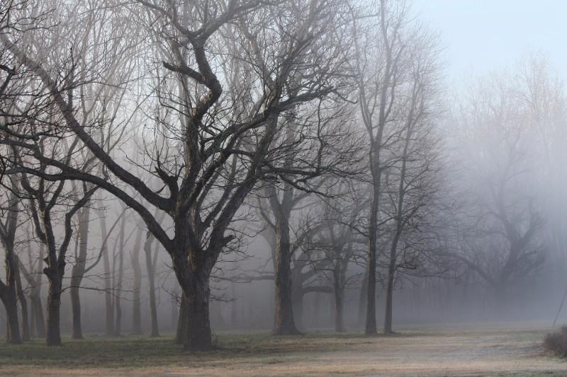 Foggy Houston-area forest.