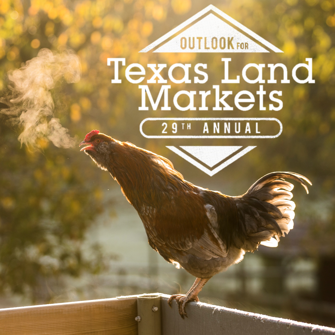 Chicken crowing with Texas Land Markets logo
