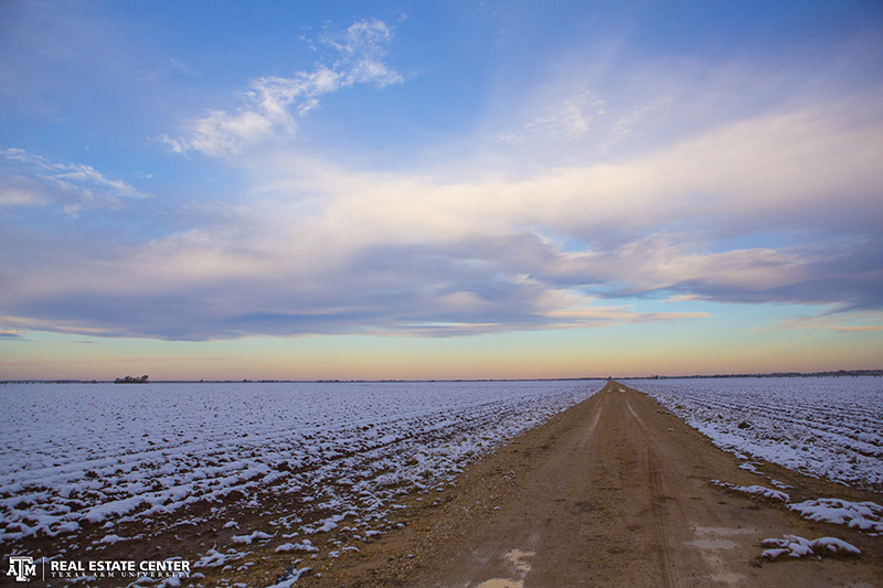 Snow covering cotton fields in Brazos County