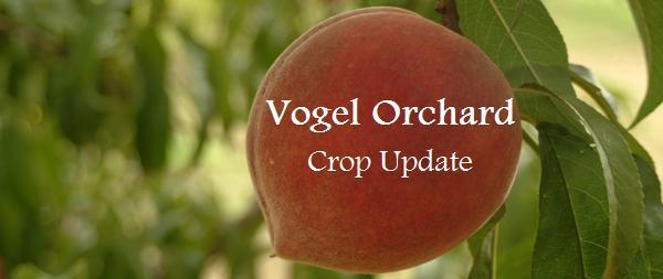 Vogel Orchard Crop Update