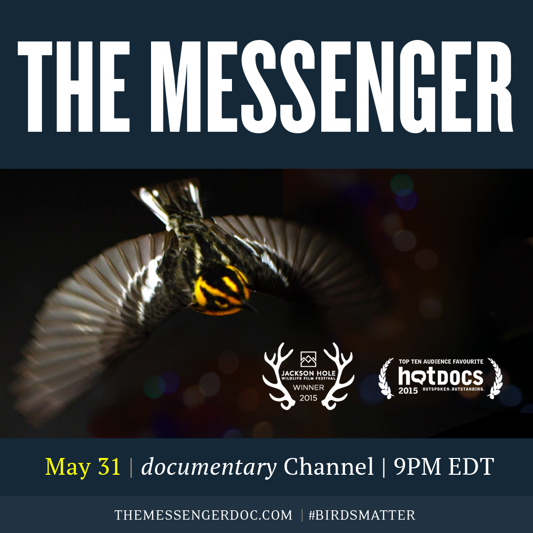 Special Announcement   –  The Messenger