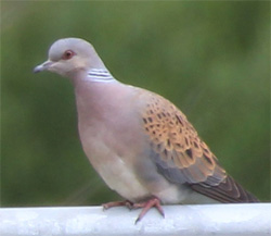 Bird of the Month