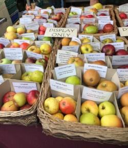 Gloucestershire apples