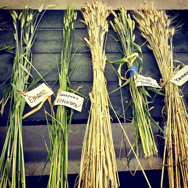 Heritage Wheats