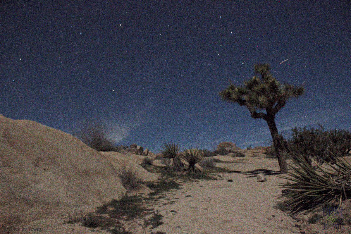 From Chapter 28: Joshua Tree at night