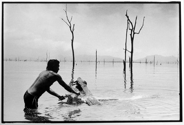 Underwater logging in Panama by Arnaud De Grave - a BOP exhibition
