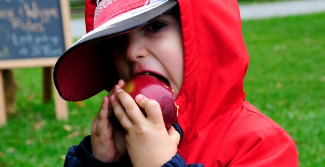 Young child bites apple