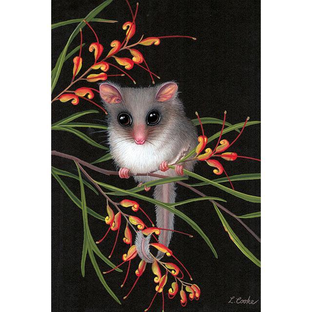 Australian Feathertail Glider by Lyn Cooke