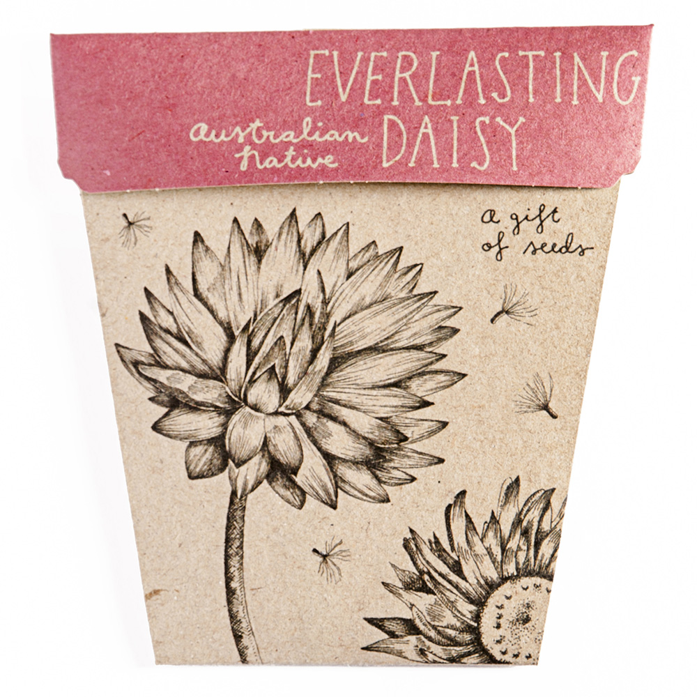 Sow-n-Sow Everlasting Daisy Seeds